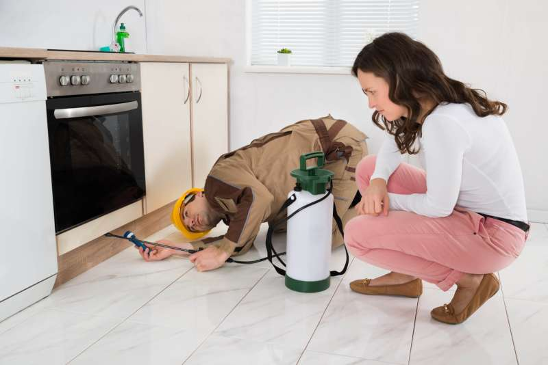 24 Hour Emergency Pest Control Services near Inglewood, CA
