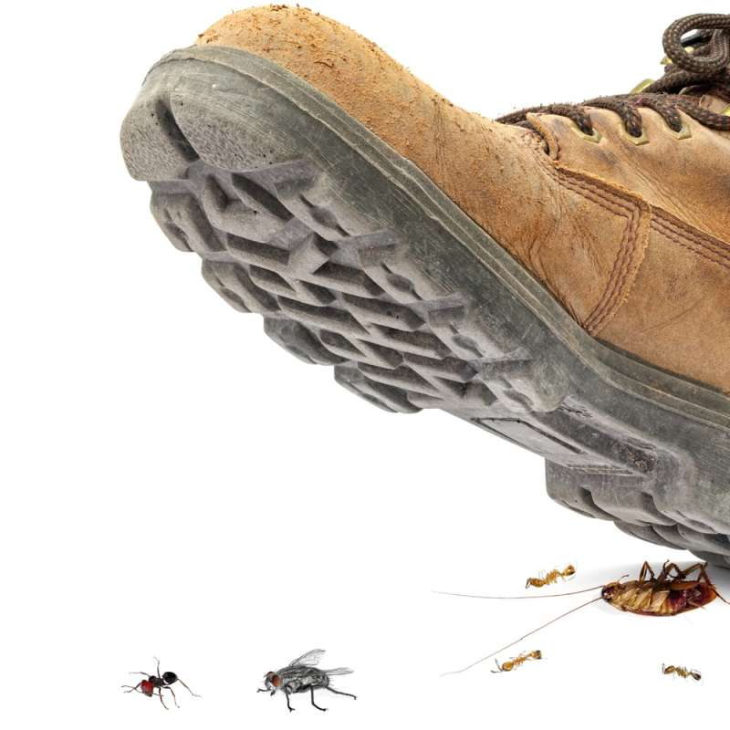 professional pest control in Castle Hills