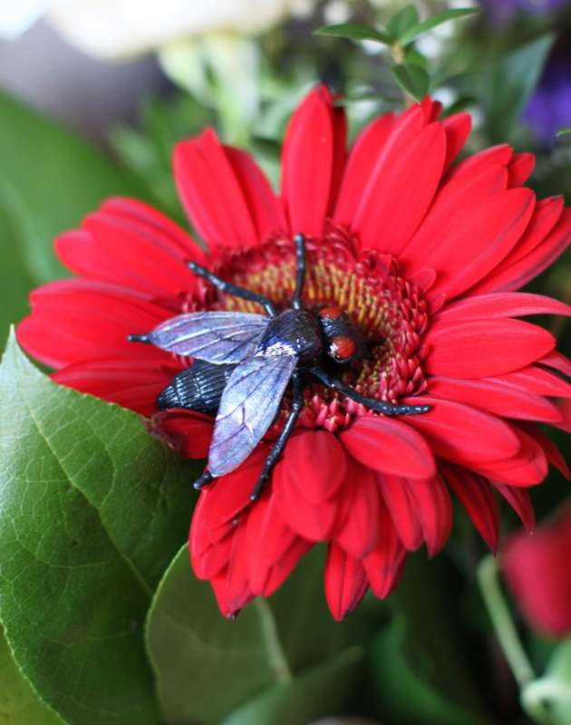professional pest control products in Centerville