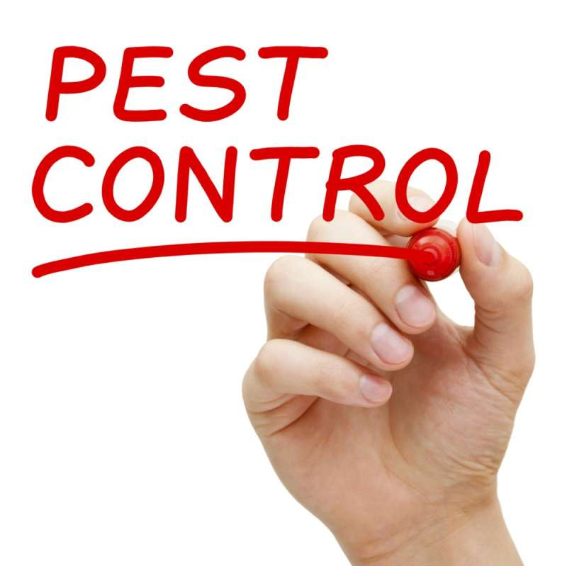 commercial pest control companies in Buck Meadows