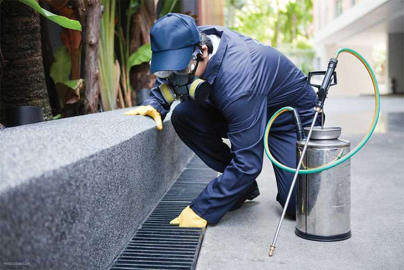 best pest control company in Rancho Cordova