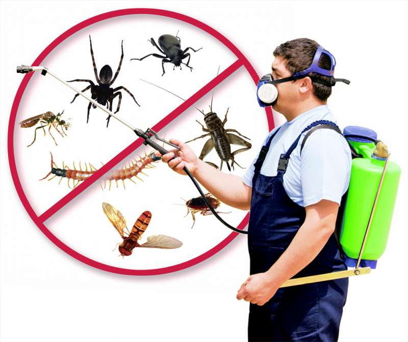 bug out pest control in Sellers
