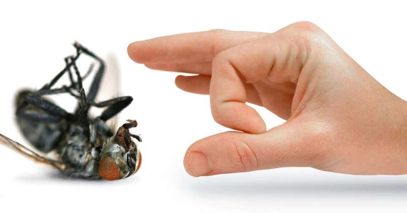 24 Hour Emergency Pest Control Services near Topeka, KS