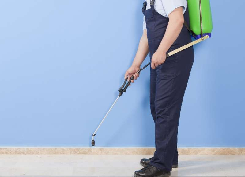 local pest control companies in Kingsbury