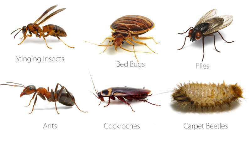 24 Hour Emergency Pest Control Services near Concord, CA