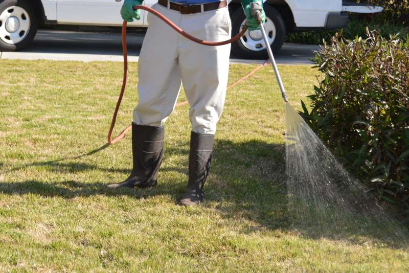 local pest control services in Eleanor