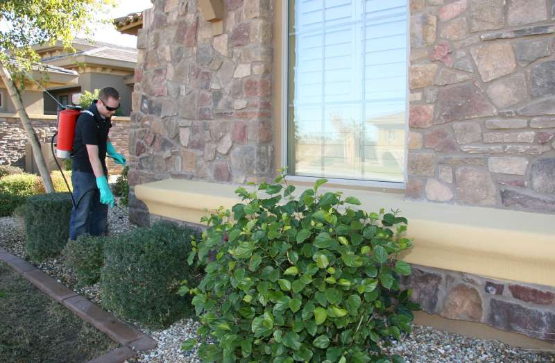 professional pest control in Lamesa