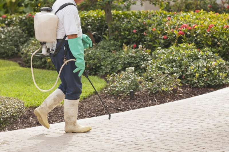 pest control program in Grove Hill
