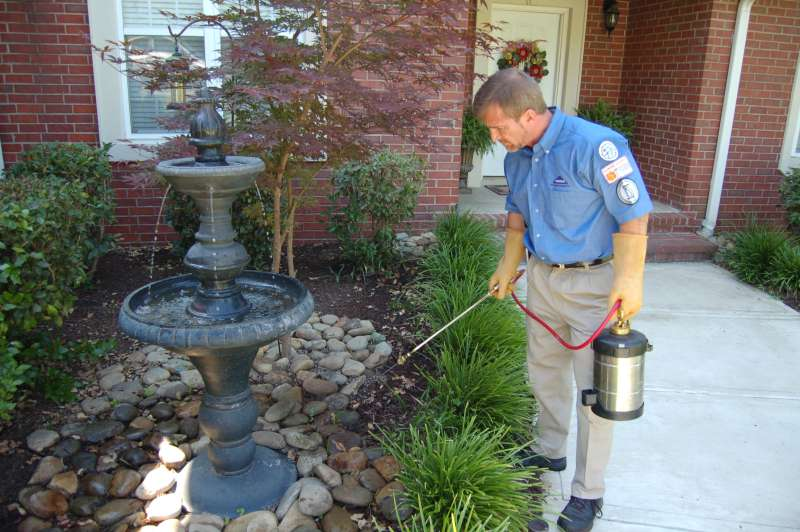 24 Hour Emergency Pest Control Services near Fairfield, CA
