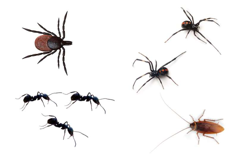 professional pest control company in Mosquito Lake