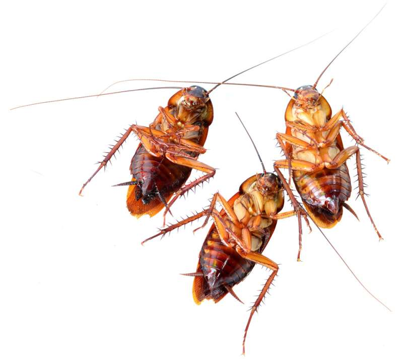 commercial pest control services in Lipscomb