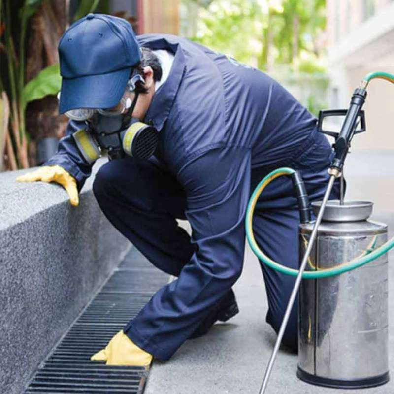 professional pest control services in