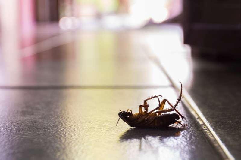 environmentally friendly pest control in Brookside Vl