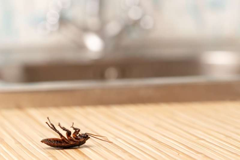 24 Hour Emergency Pest Control Services in Hayward, CA