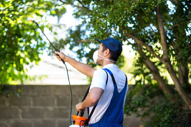 bird pest control in Holden