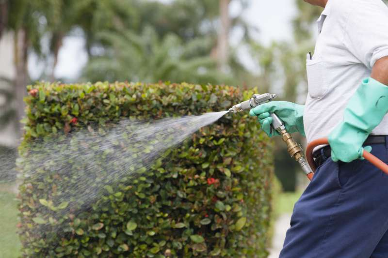 local pest control services in Naples
