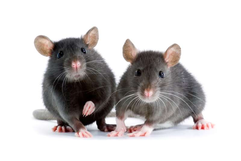 commercial pest control services in Eleanor