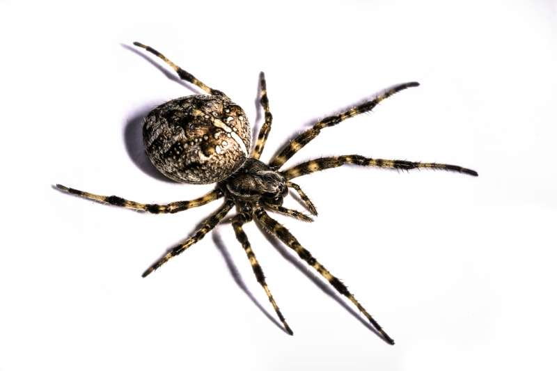 24 Hour Emergency Pest Control Services in College Station, TX