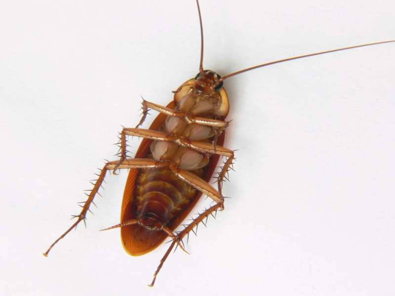 pest control cockroaches in Wasco