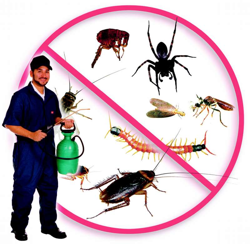 insect pest control in